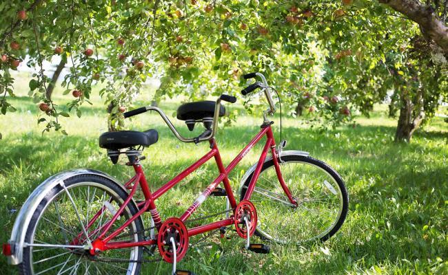 los distintos precios de bicicletas del estilo Tandem
